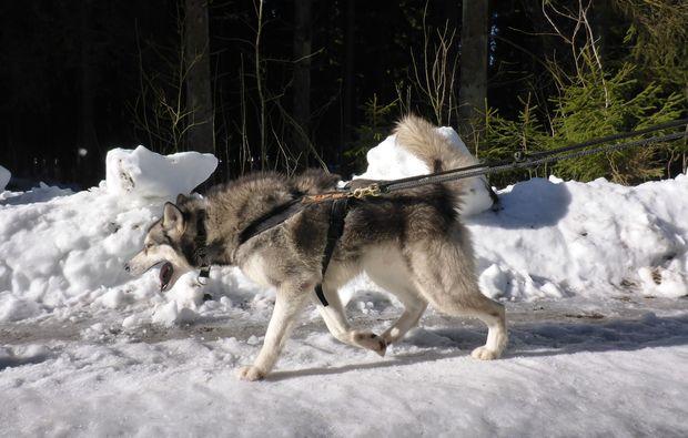 husky-trekking-clausthal-zellerfeld-sport