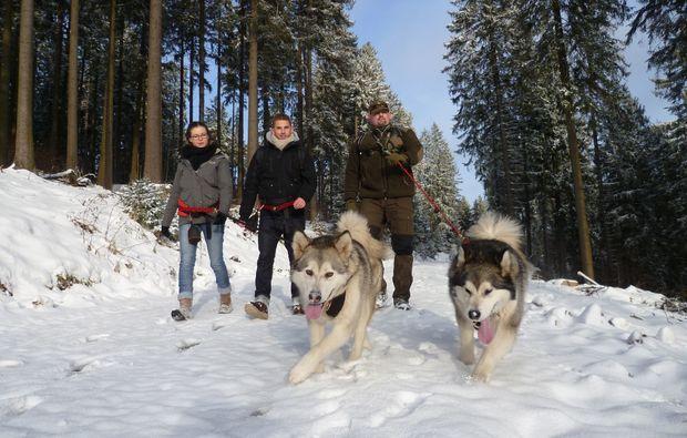 husky-trekking-clausthal-zellerfeld-training