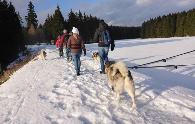 husky-trekking-clausthal-zellerfeld-winter