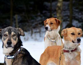 Husky Wandern / Husky Trekking - Alt Nagelberg 1,5 Stunden