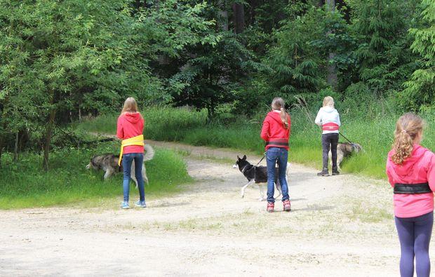 huskys-trekking-alt-nagelberg