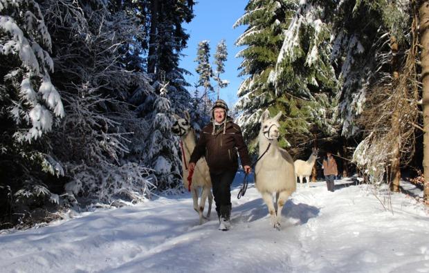 fuchstal-lama-alpakawanderung-winter
