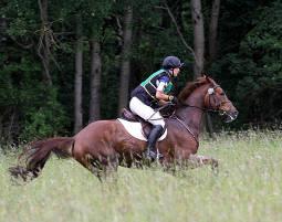 Pferdesport: Hinter den Kulissen Ein Tag auf dem Profi Turnierstall