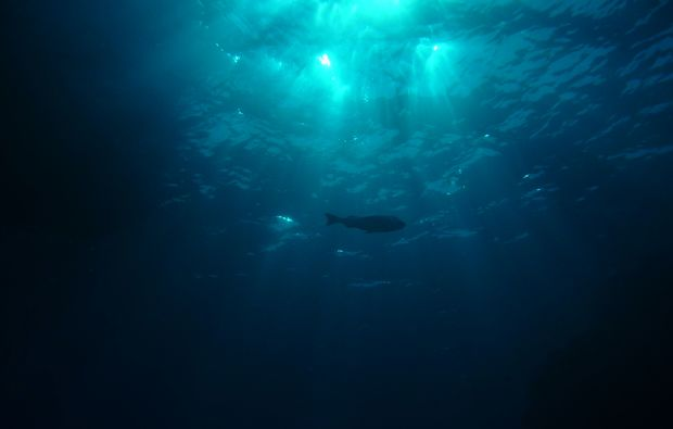 ssi-open-water-diver-kempten-fisch