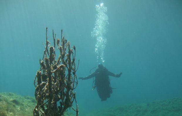 ssi-open-water-diver-kempten-tauchen