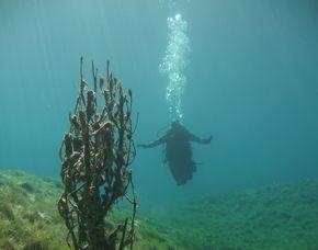 SSI Open Water Diver - Kempten Theorie, 3 Pool  & Freiwasser Einheiten