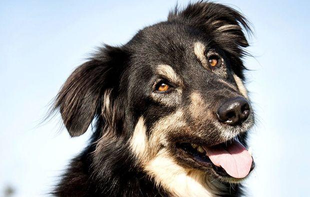 animalisches-fotoshooting-konstanz-hund
