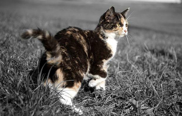 animalisches-fotoshooting-konstanz-natur1487149859