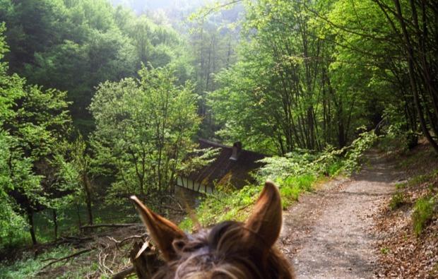 pferde-abenteuer-sassenburg-natur