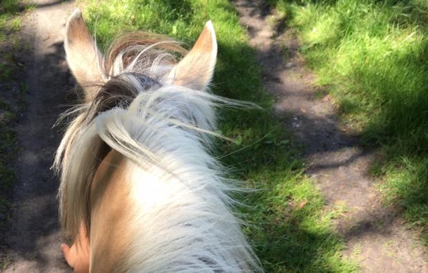 pferde-abenteuer-sassenburg-outdoor