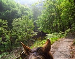 Reitkurse Reiturlaub Pferdemessen