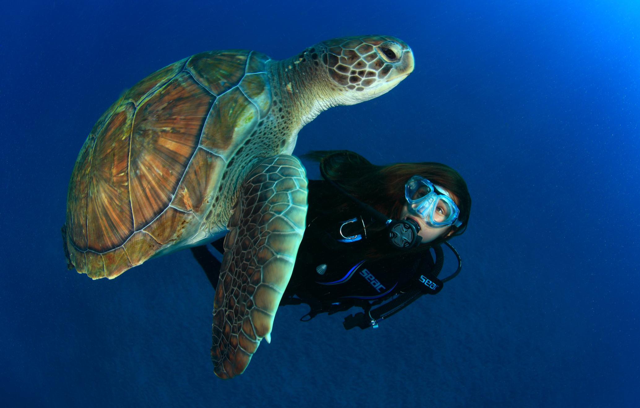 tauchkurs-open-water-diver-beginner-in-nordhausen-bg2