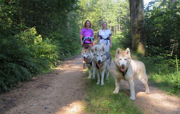 husky-trekking-kulz-walking