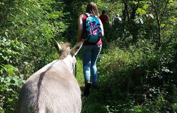 esel-trekkingtour-rurberg-wandertour