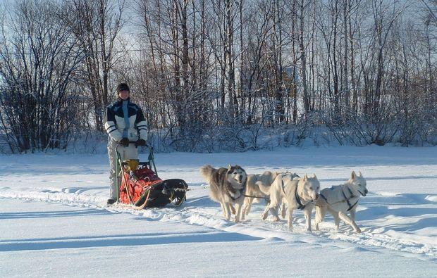schlittenhunde-kurs-frankendorf1511278388