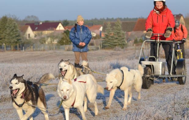 wagenfahrt-huskies-workshop-frankendorf