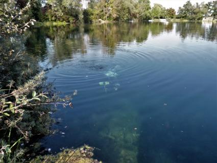 Wassertemperatur vettelschoß blauer see Blauer See