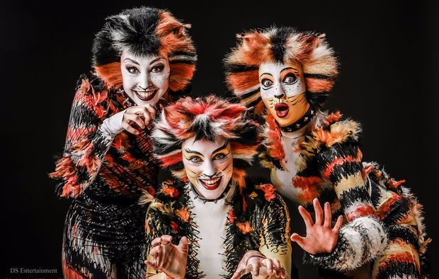 musical-dinner-melle-cats