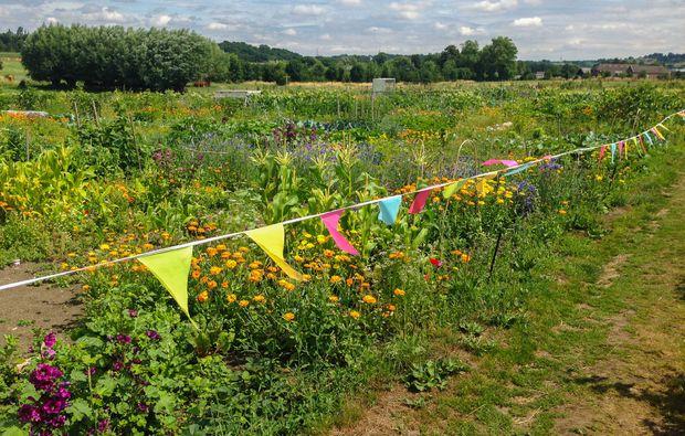 urban-gardening-bottrop-kirchhellen