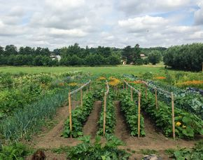 Urban Gardening Bottrop