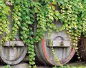 Bild Weinreisen - Gutscheine für Weinreisen an Freunde edler Tropfen verschenken