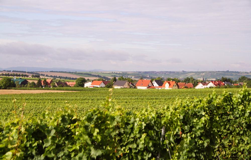weinreisen-wintersheim-bg3