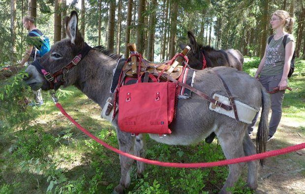 eseltrekking-heinade-fackelwanderung-tour