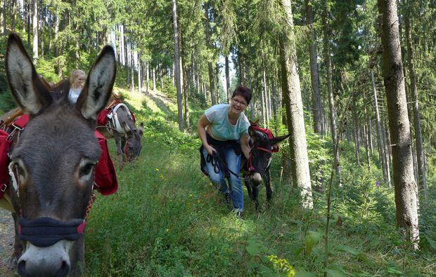 tour-eseltrekking-heinade-fackelwanderung-natur