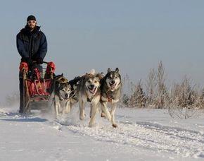 Schlittenhundefahrten (Kennenlerntour) Ca. 2 Stunden