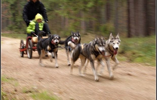 husky-workshop-alt-nagelberg