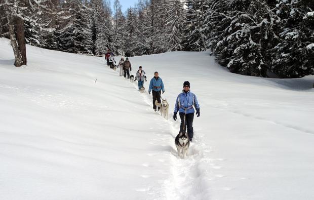 winter-husky-trekking