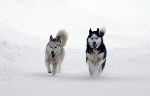 winter-schlittenfahrt