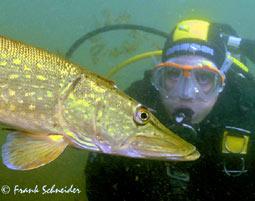 c-open-water-diver