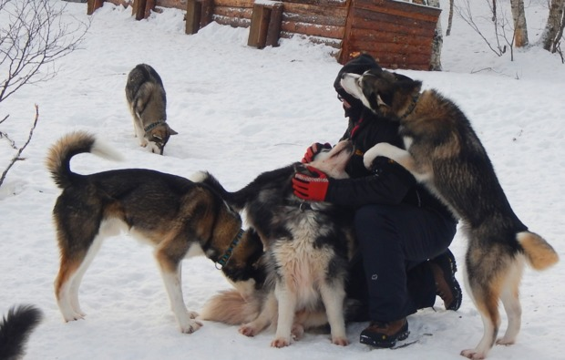 husky-abenteuer-trip-asele-huskys
