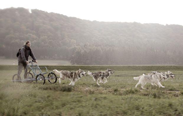 husky-trekking-dietfurt-fahrt