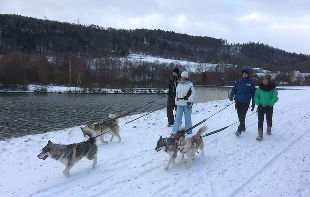 husky-trekking-dietfurt-spaziergang