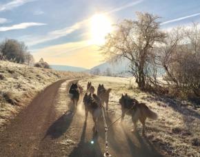 Husky Erlebnistag - JSMD - Dietfurt Husky-Ausfahrt & -Trekkingtour - ca. 3 Stunden