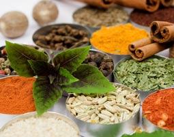 Indische Küche - Lübeck Mehr-Gänge-Menü, inkl. Tee & Wasser