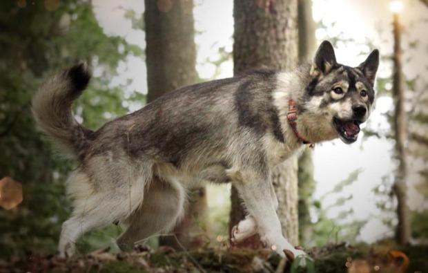 husky-trekking-dietfurt-atemberaubend