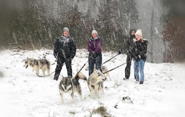 outdoor-husky-erlebnis