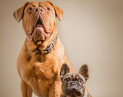 fotoshooting-tiere-essenbach-grosser-und-kleiner-hund