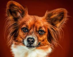 fotoshooting-tiere-essenbach-hund-orange