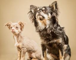 Tier-Fotoshooting für 1 Person & bis zu 3 Tieren, inkl. 3 Prints & 3 Bilder digital, ca. 1,5 Stunden
