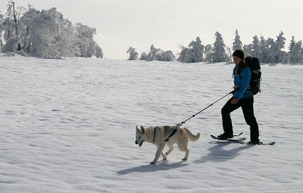 huskytrekking-cnovec