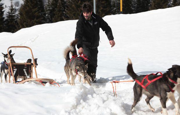 schlittenhunde-fahrt-trentino-suedtirol41510843985