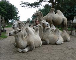 2-kamele-loewenberger-land