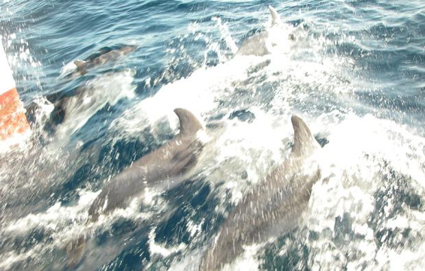 motorboot-fahren-koeln-delphine