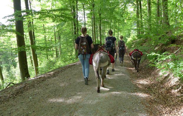 esel-trekking-heinade-abenteuer