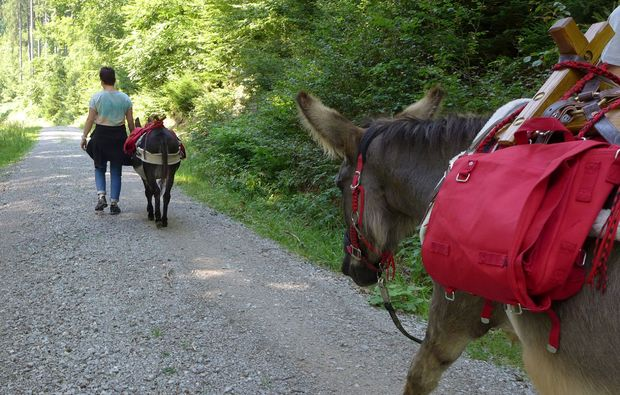 esel-trekking-heinade-spass