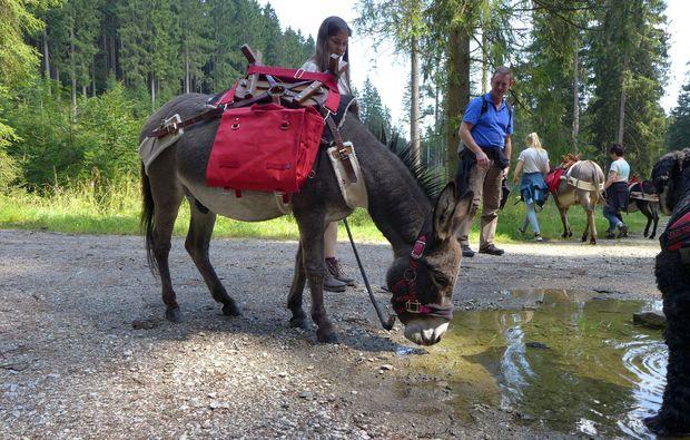esel-trekking-heinade-tierisch